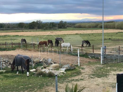 Terrain de 21 500 m2, mas de 650 m2, parc naturel des Aiguamolls