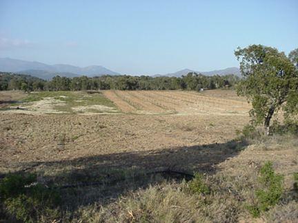 Alt Empordà: Terrain de 25 256 m² avec puit et des arbres en pin