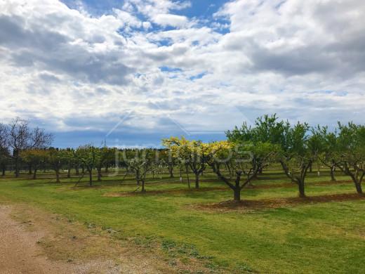 Terrain d'arbres fruitiers, 8724m2, Figueres